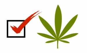 Marijuana Blog Image 2